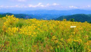 The Climbs of the Binge – Bearwallow Mountain